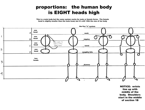 body proportions post